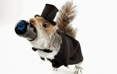 BrewDog stuffed squirrel